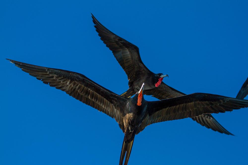 FKAS Web birdset1 (9 of 13).jpg