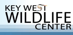 KeyWestWildlifeCenter_r1_c1.png