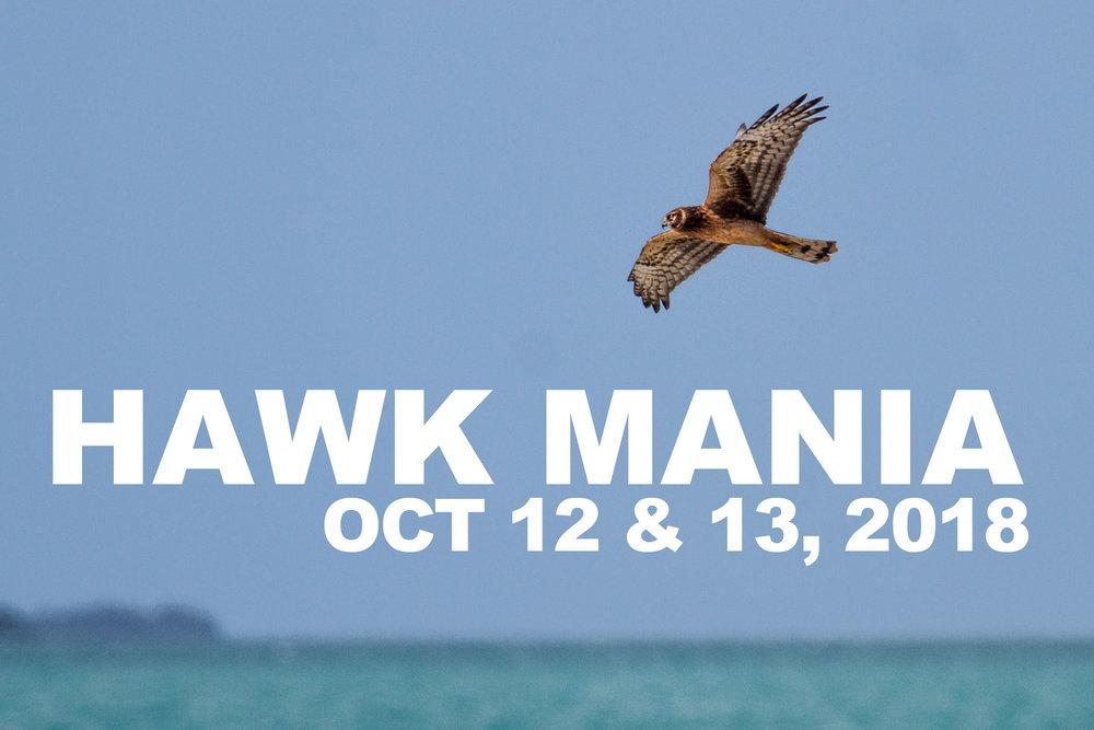 Hawk Mania 2018j.jpg