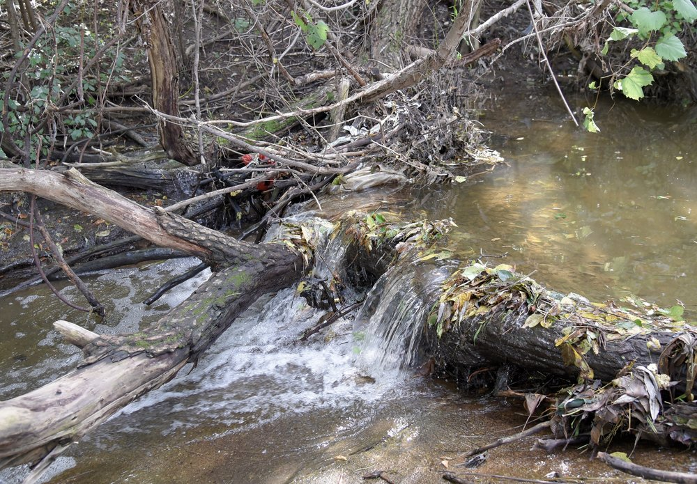 A major blockage on South Branch Creek that was taken out by dedicated MillerCoors volunteers.