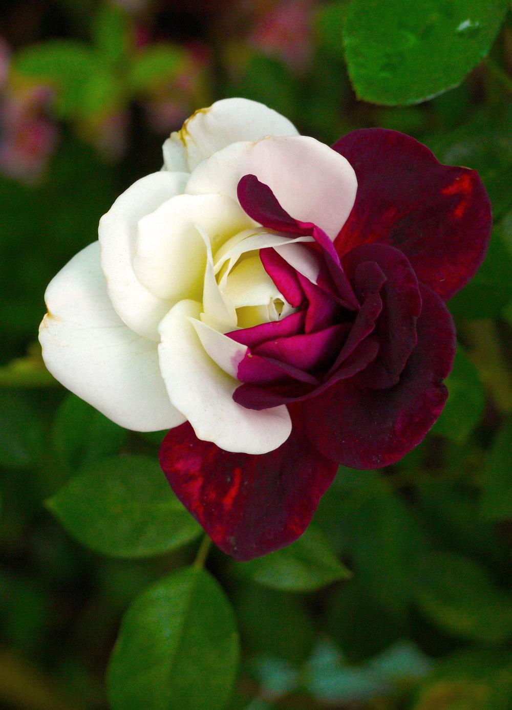 flower420.jpg