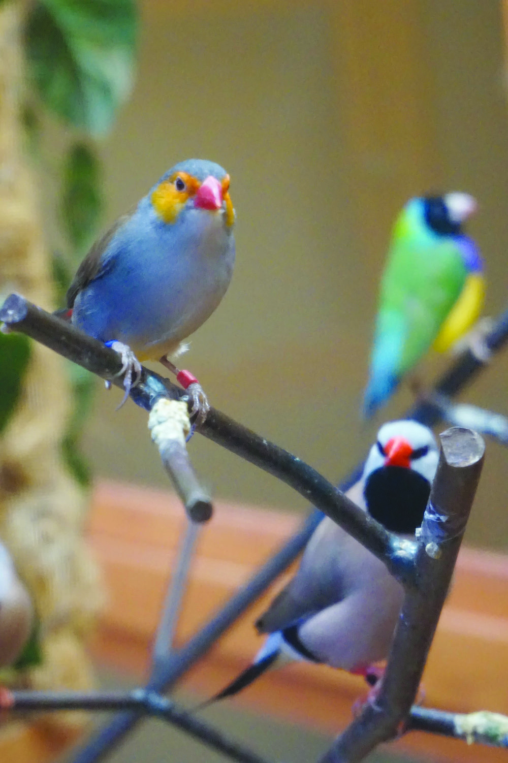 The birds at Rose Arbor Hospice Residence