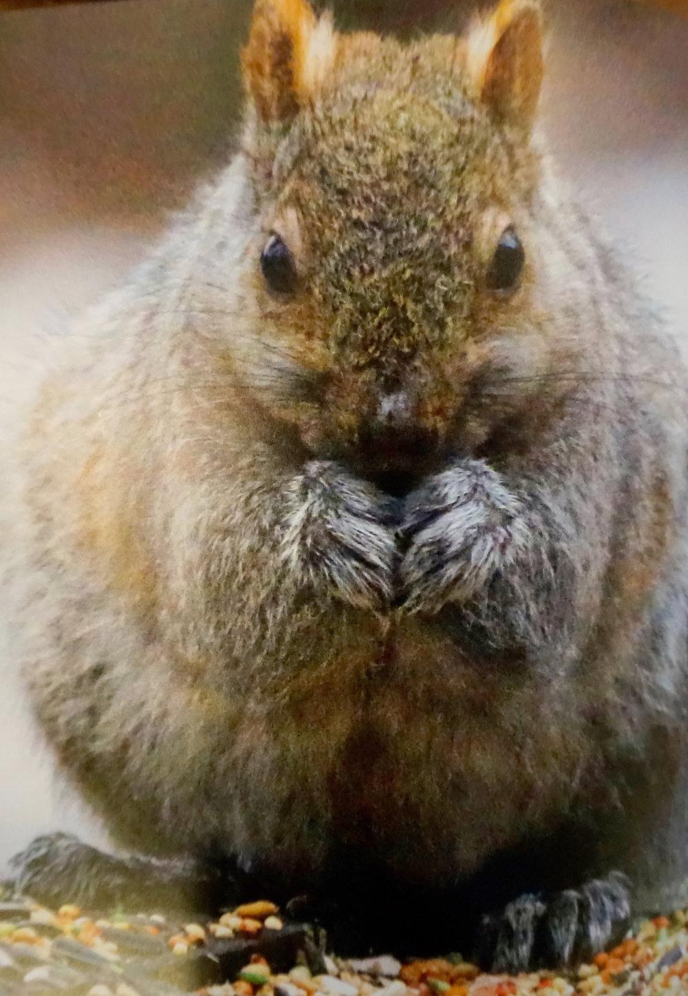 Wildlife abounds at Glenn Arbor and Rose Arbor