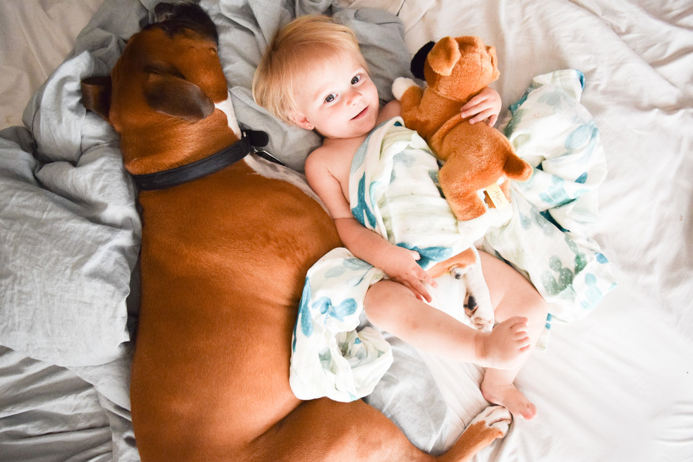 What's the best bed time for babies? -- Baby and Boxer Puppy Photos