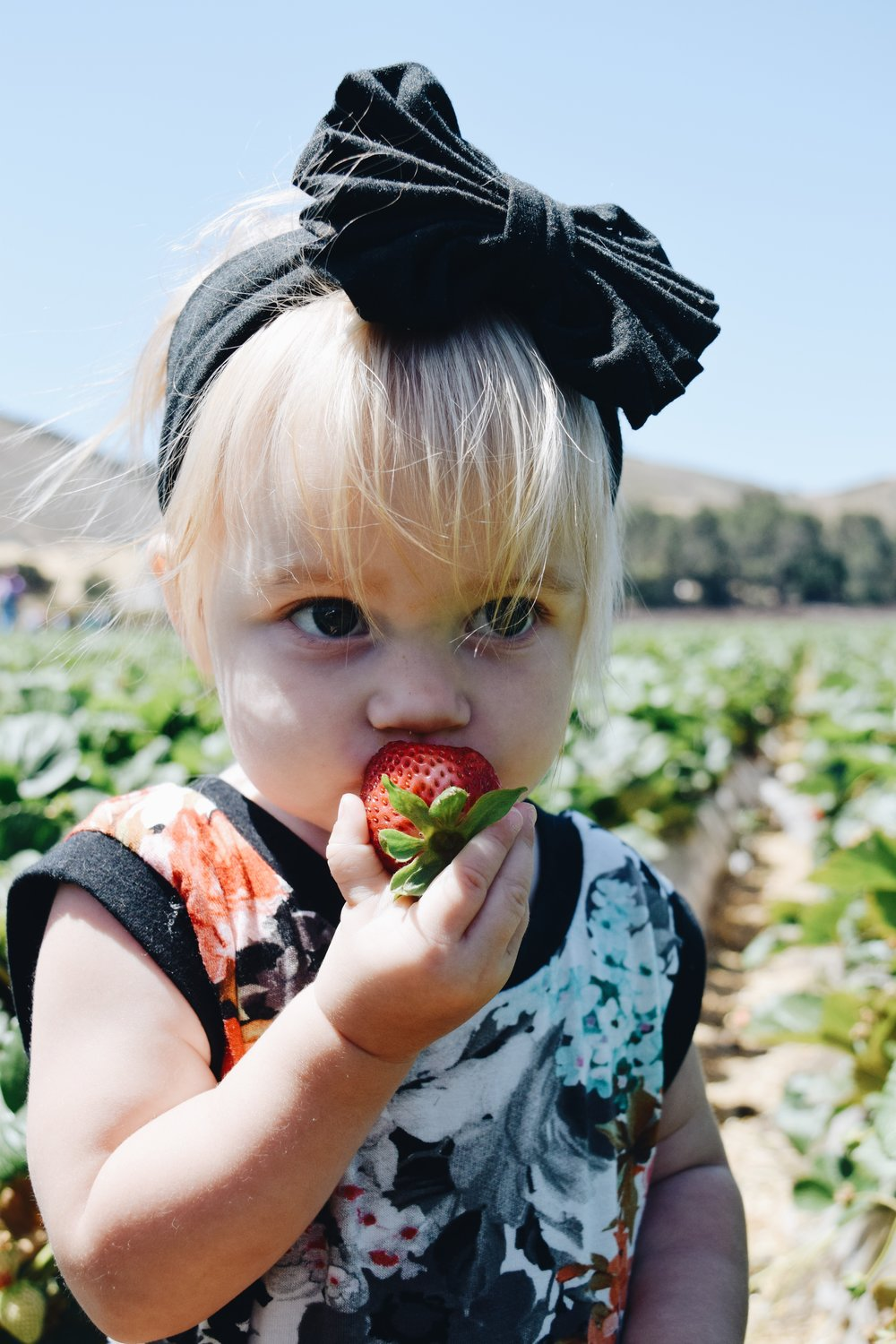 Strawberry Picking at Underwood Family Farms