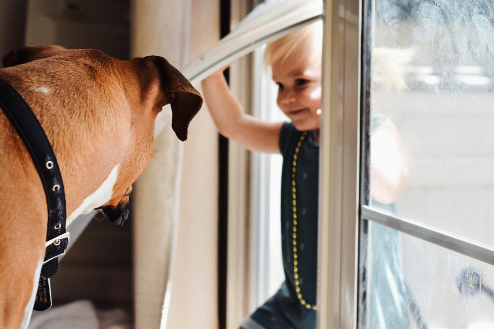 Easy to Install Sliding Glass Door Dog Door - PetDoors.com - EnduraFlap Pet Door