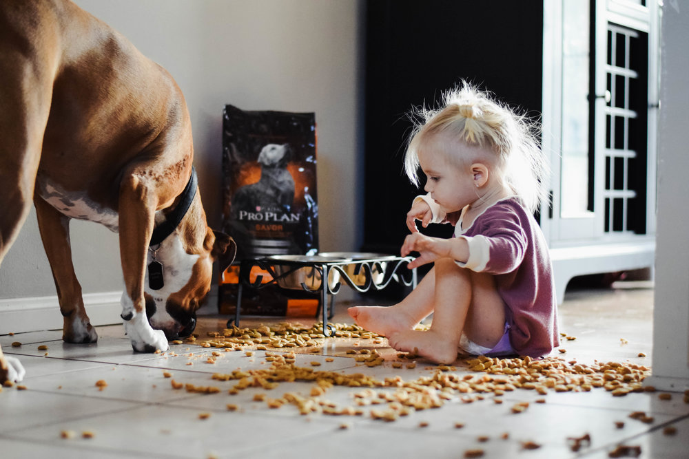 What to look for in a dog food -- Purina Pro Plan Savor Dog Food -- PetSmart -- Mommy Blogger-Vlogger - The Overwhelmed Mommy