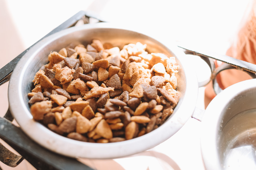 Healthiest Dog Food for Boxers -- The Overwhelmed Mommy Blogger