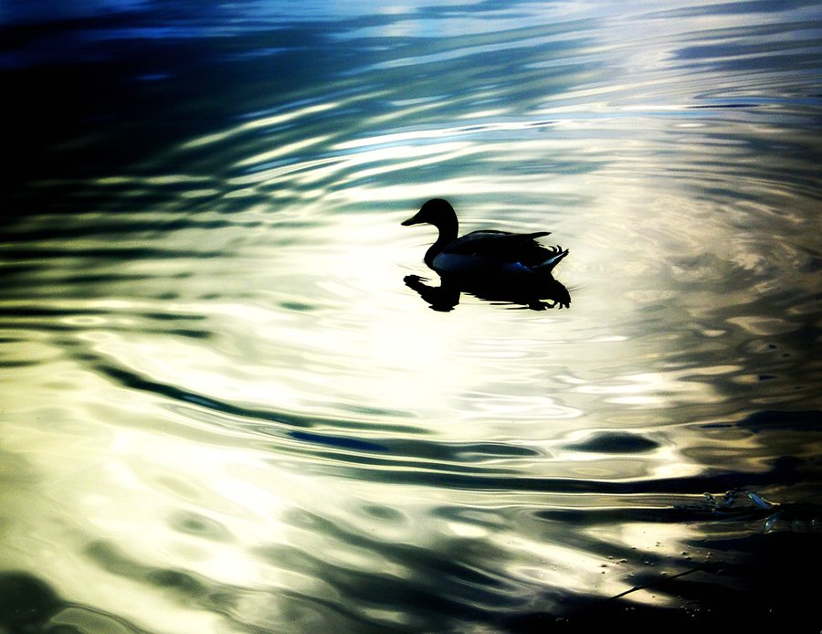 The_Duck_by_clumsyperson