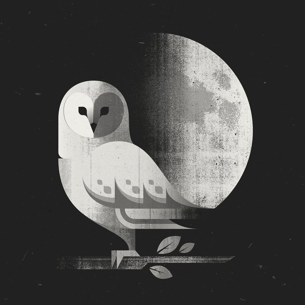 barn_owl_final.jpg