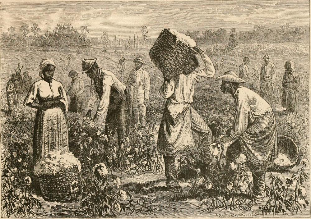 Picking Cotton.jpg