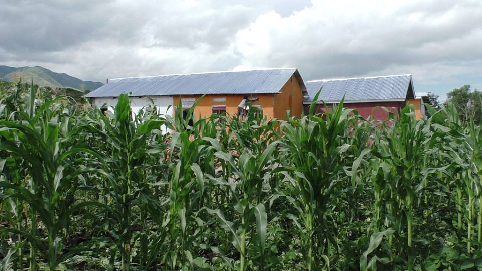 Corn is just one of many crops grown on our farmland at BiZoHa.
