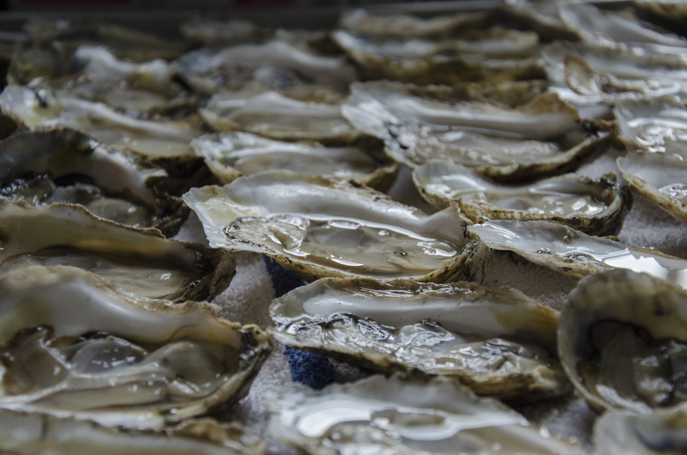 Rappahannock Oyster, Virginia US