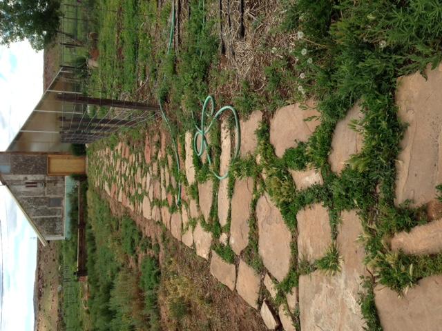 gardenpath.JPG
