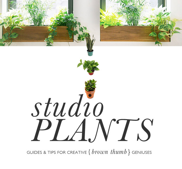 Studio Plants - Indoor Plants for Brown Thumbs - Design Wine Sunshine - Oliwild