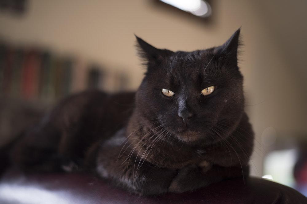gary-cat_24977965187_o.jpg