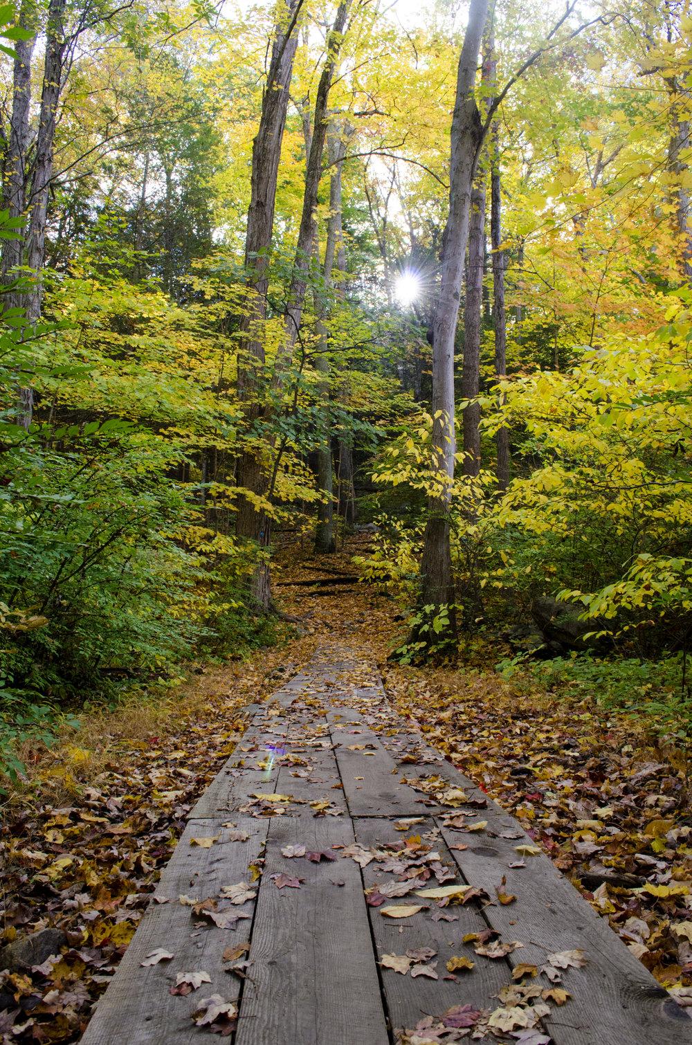 autumn-bridge_21714155543_o.jpg