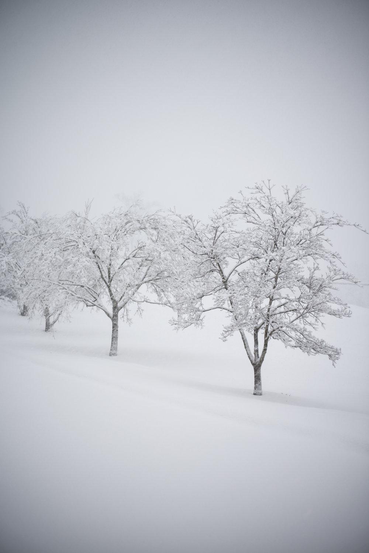 silence-and-snow2_40638350362_o.jpg