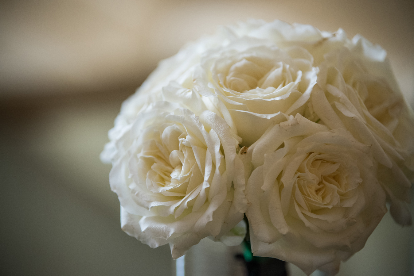 the bridesmaids bouquets were a simple arrangement of white patience garden roses wrapped in emerald ribbon with a black lace accent - White Patience Garden Rose