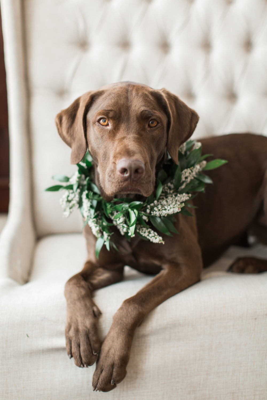 NJ Wedding, Running Deer Golf Club, Dog Collar, Floral Collar, Samantha Jay Photography