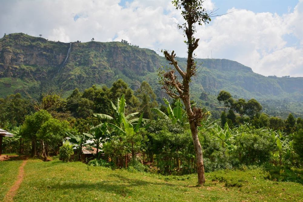 Our farm on Mt Elgon just outside of Mbale in far east Uganda