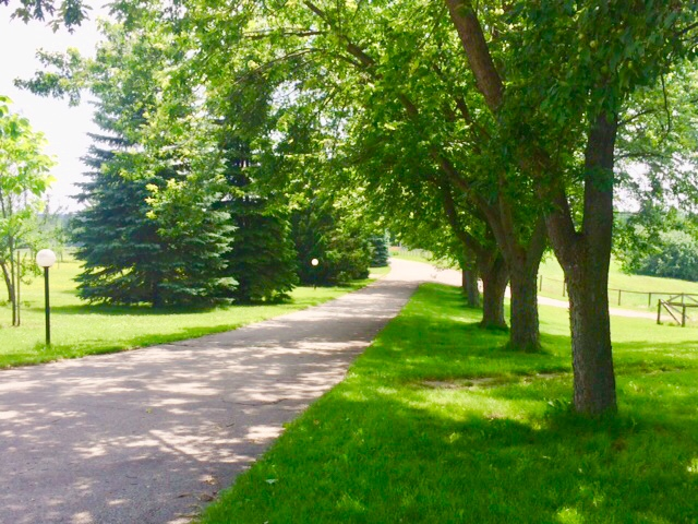 The laneway of the farm.