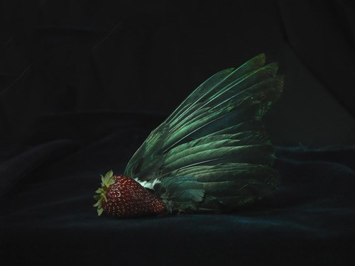 Fiona Pardington  Tui Wing and Organic Strawberry, Ripiro Beach , 2012 Inkjet print on Epson hot press 310gsm cotton rag Dimensions variable Edition of 10   _______