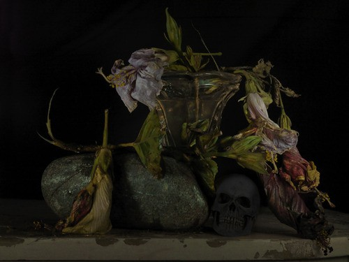 Fiona Pardington  Still Life with Bluff Rock and Dead Hibiscus , 2012 Inkjet print on Epson hot press 310gsm cotton rag Dimensions variable Edition of 10  _______