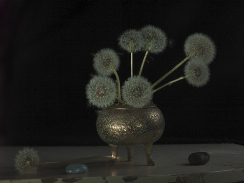 Fiona Pardington  Grandma's Incense Burner & Dandelion Clocks , 2012 Inkjet print on Epson hot press 310gsm cotton rag Dimensions variable Edition of 10   _______