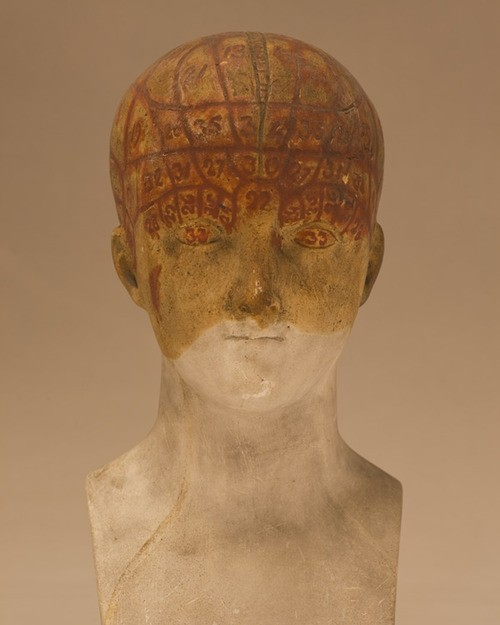 Fiona Pardington  Female Phrenology Buste: A Study in Gold , 2010 Inkjet print on Hahnemule cotton rag From the collection Musee de I'Homme, Paris Dimensions variable Edition of 10   _______