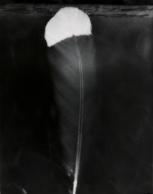 Fiona Pardington  WiriWiri Tremble , 2008 Silver gelatin print 600 x 500 mm Edition of 5    _______