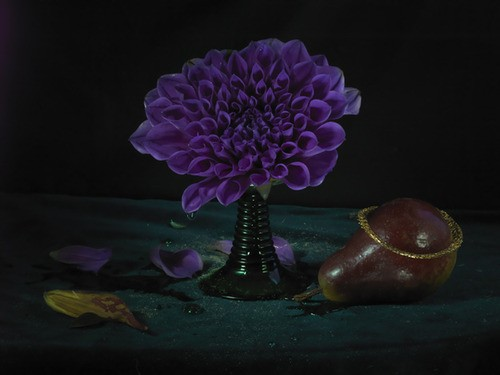Fiona Pardington  Dying Purple Dahlia & Pear , 2012  Inkjet print on Epson hot press 310 gsm cotton rag Dimensions variable Edition of 10   _______