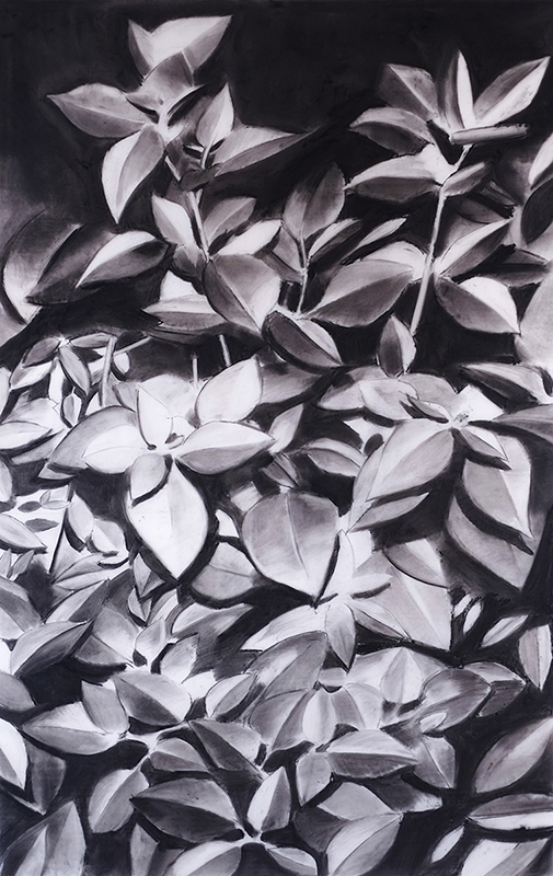 Douglas Stichbury  Night Plants , 2016 Framed charcoal on paper 600 x 350 mm [Private Collection]  _______