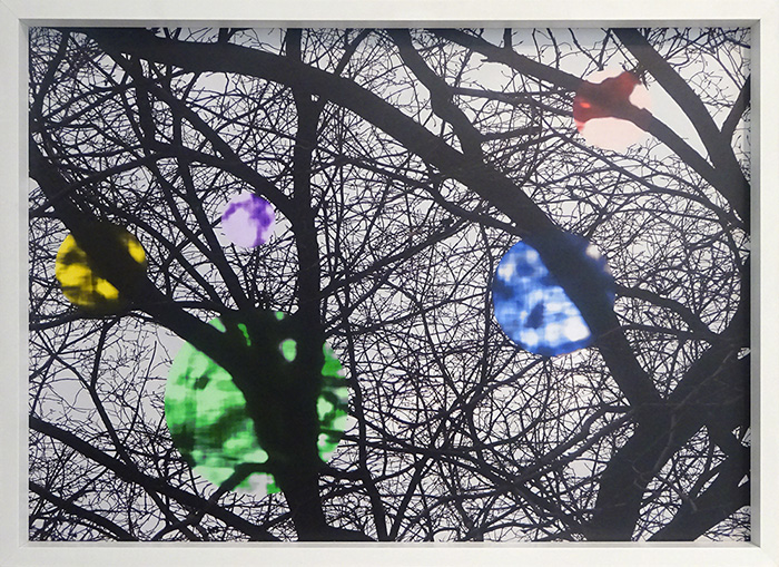 Wayne Youle  Strange Fruits (Chicago) , 2009-2010 Framed laminated pigment print photograph, (unique print, 1/1) 615 x 860 mm $4,000 incl. GST  _______