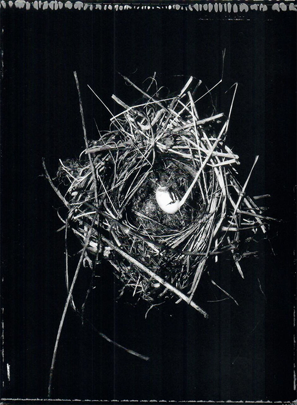 Fiona Pardington  Dunnock's (Hedge Sparrow) nest with a broken egg, found in a redcurrant bush. Prunella modularis 20.01.93, Wingatui Otago Museum , 2007 Framed toned silver bromide fibre based print 600 x 500 mm (image size) $8,500 incl. GST Edition of 5  _______