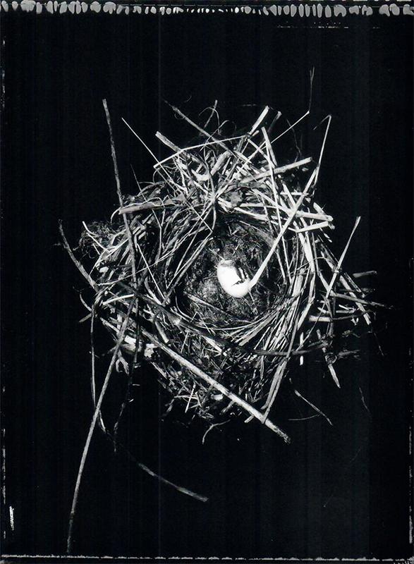 Fiona Pardington  Dunnock's (Hedge Sparrow) nest with a broken egg, found in a redcurrant bush. Prunella modularis 20.01.93, Wingatui Otago Museum , 2007 Framed toned silver bromide fibre based print 600 x 500 mm (image size) $8,500 incl. GST Edition of 5  _______