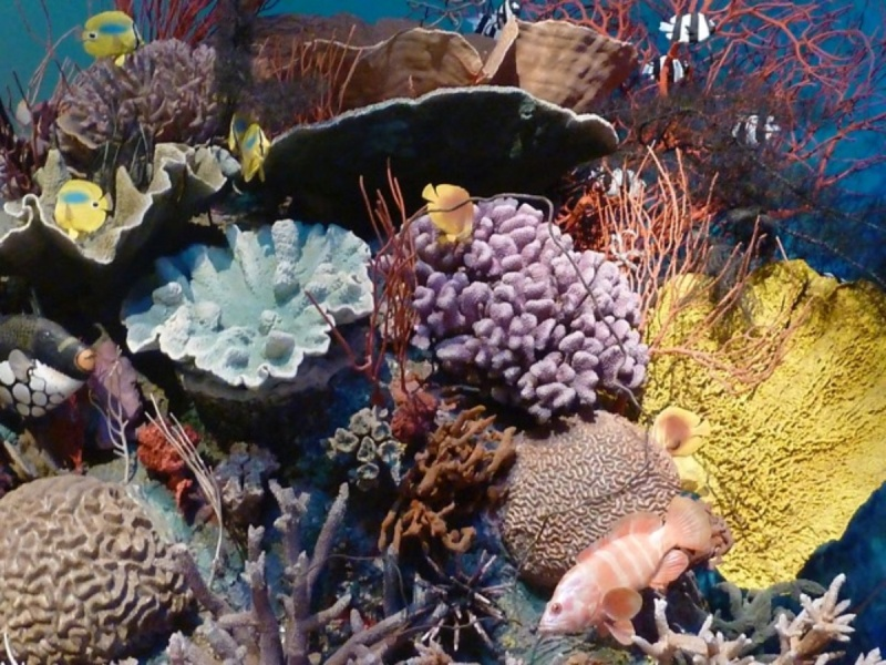 Peter Peryer  Coral Reef,  2011 Pigment inks on paper 500 x 670 mm  ______