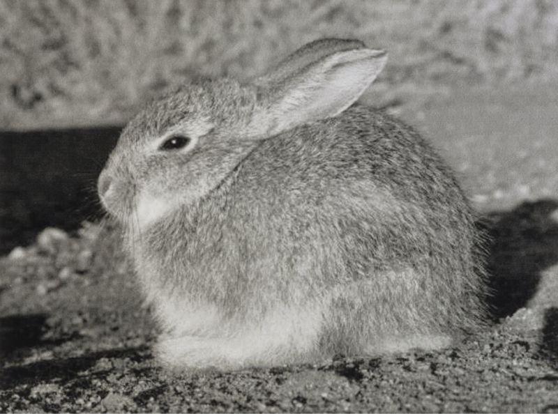 Peter Peryer  Rabbit, Lightening Field, USA,  2000 Vintage silver gelatin print 106 x 142 mm  ______