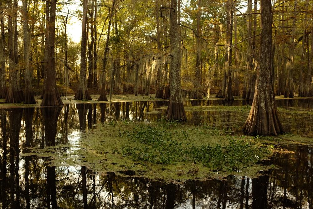 Spring Bayou, Louisiana.