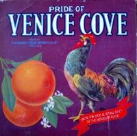 ST Venice Cove.jpg