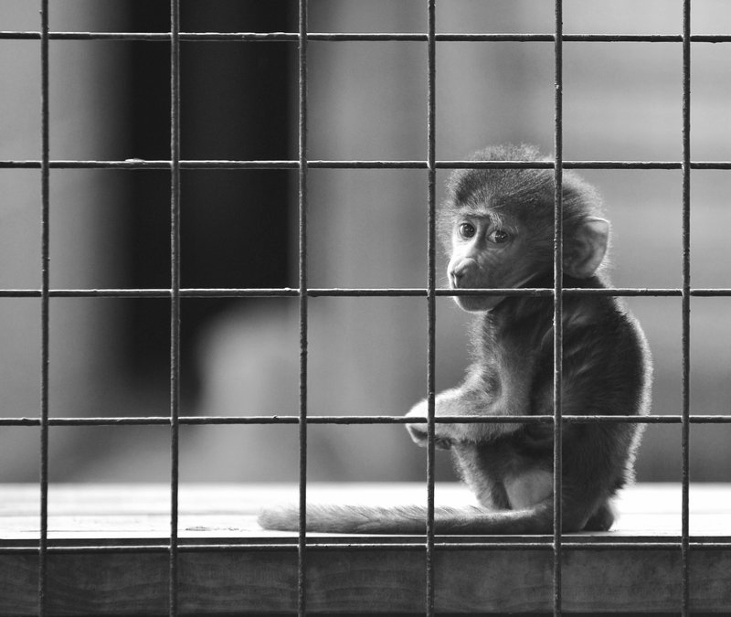 It's not you. It's your cage.   photo by Stewart Hardy