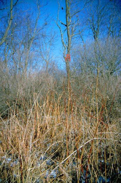 Arsem_Red in Woods_PCD0006_photo by Bob Raymond_crpadj_2048_72 copy.jpg