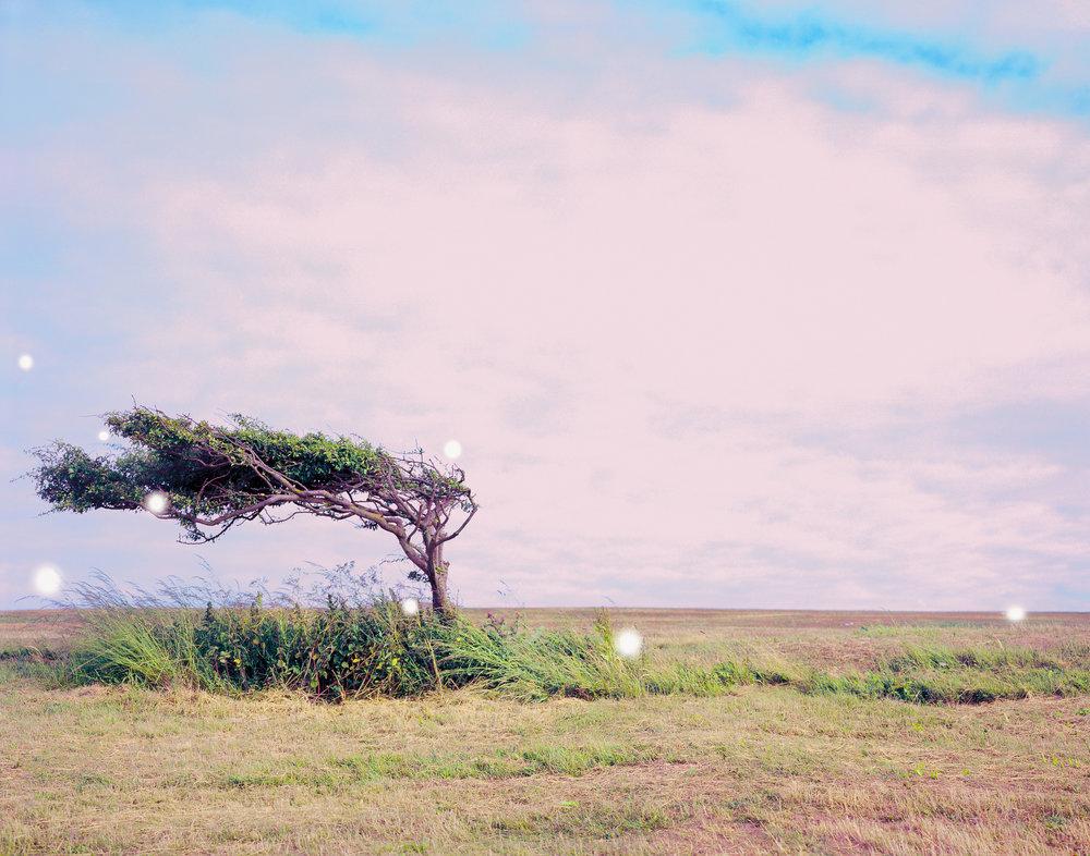 Tree-folio-2.jpg