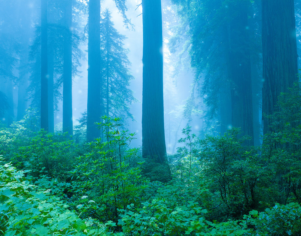 redwood-mist-folio-2.jpg
