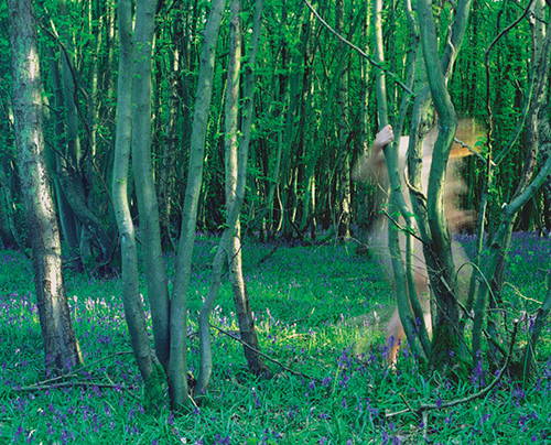 CAROL_FULTON_PHOTOGRAPHY_Nude Figures in Bluebell Wood.jpg