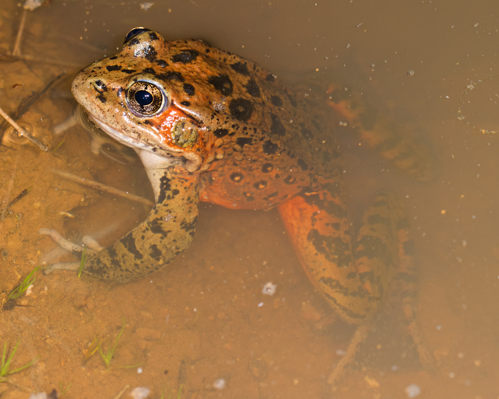 North-Bay-Highlands-Frog.jpg