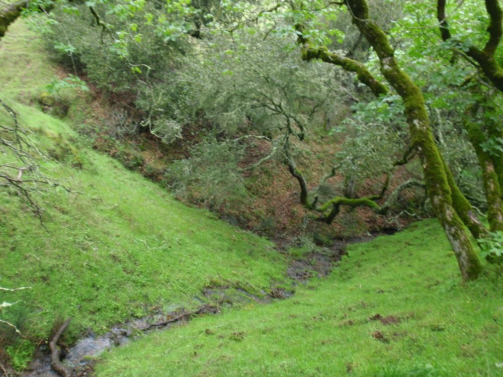 wetland seep.jpg