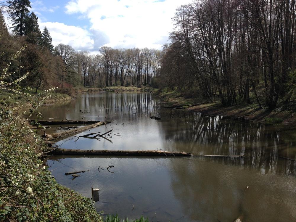 Rinearson-Natural-Area-Restoration.JPG