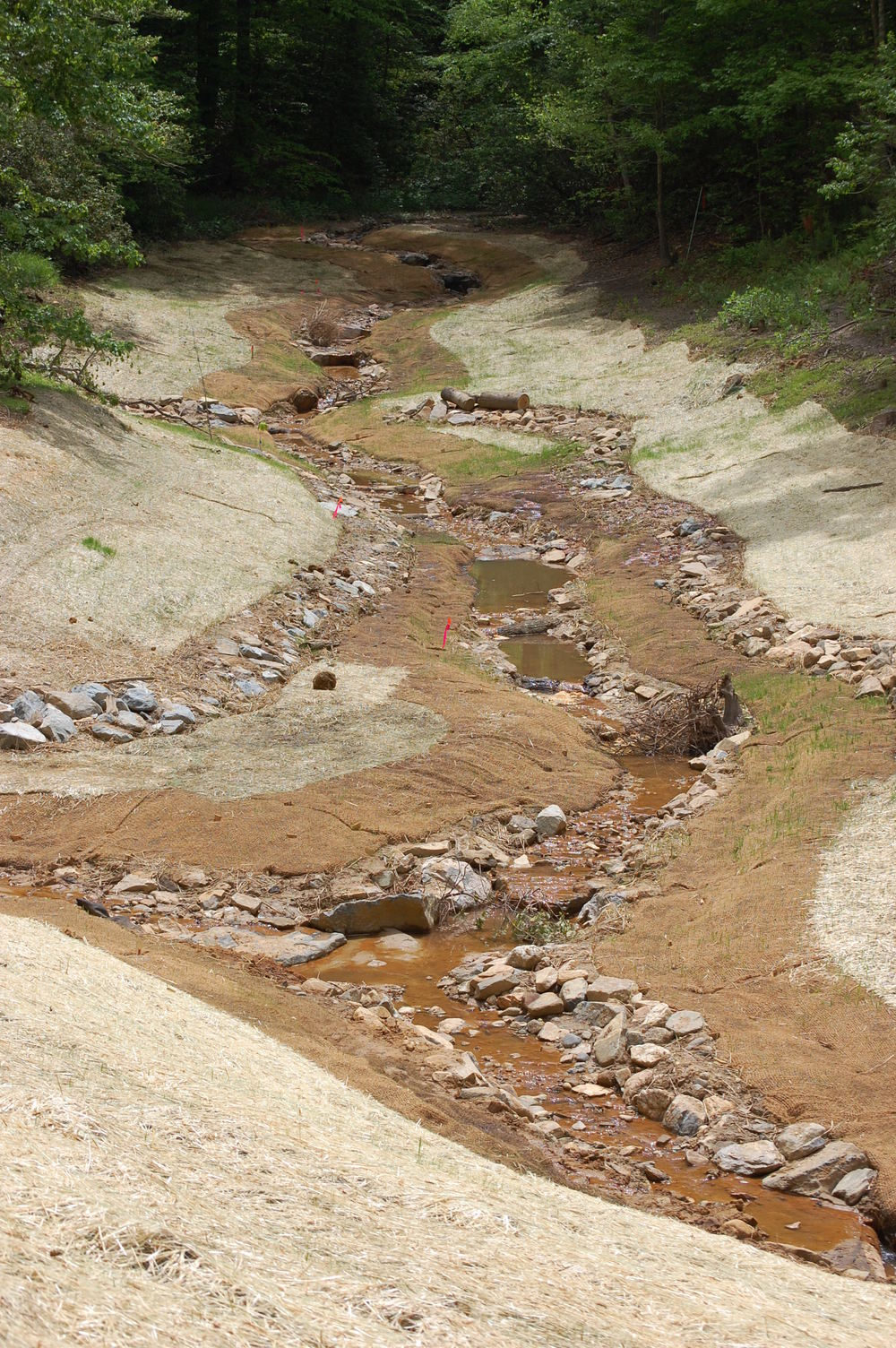 Coan-Mill-Stream-Mitigation-Bank.JPG
