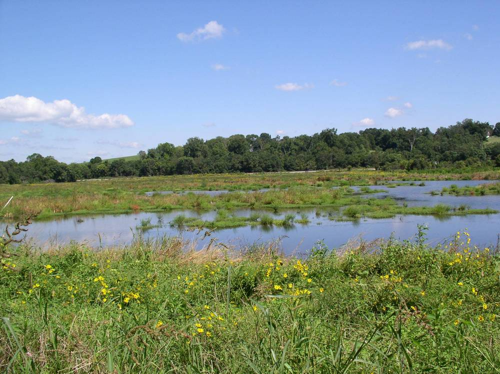 James  River Mitigation Landbank (Wetland).jpg